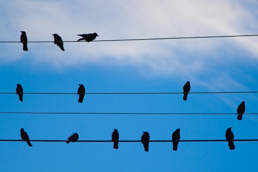 birds-on-power-lines